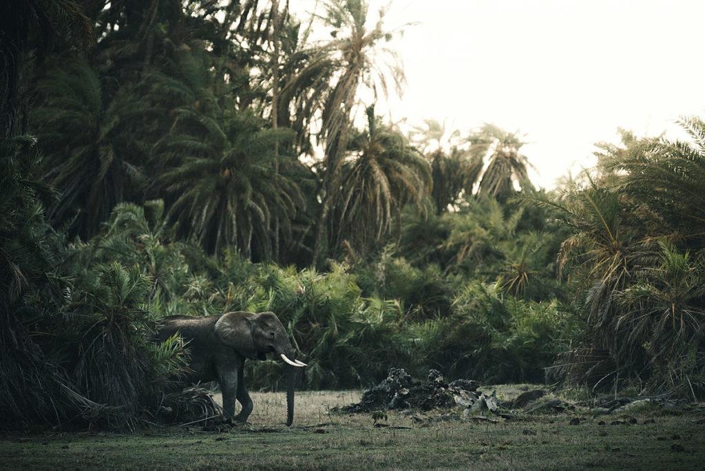 en elefant i jungelen